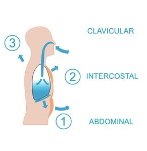 tipos-de-respiracion